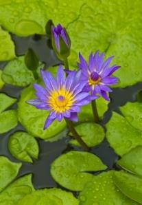 Image courtesy of markuso/ FreeDigitalPhotos.net
